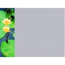 Зеркало Цветы 24